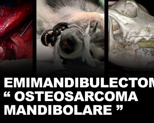 Emimandibulectomia