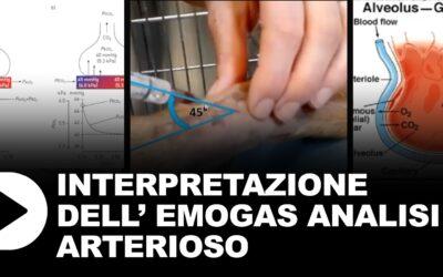 Interpretazione dell'emogas analisi arterioso