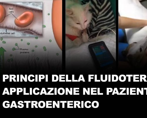 La fluidoterapia nel paziente gastrenterico parte 1
