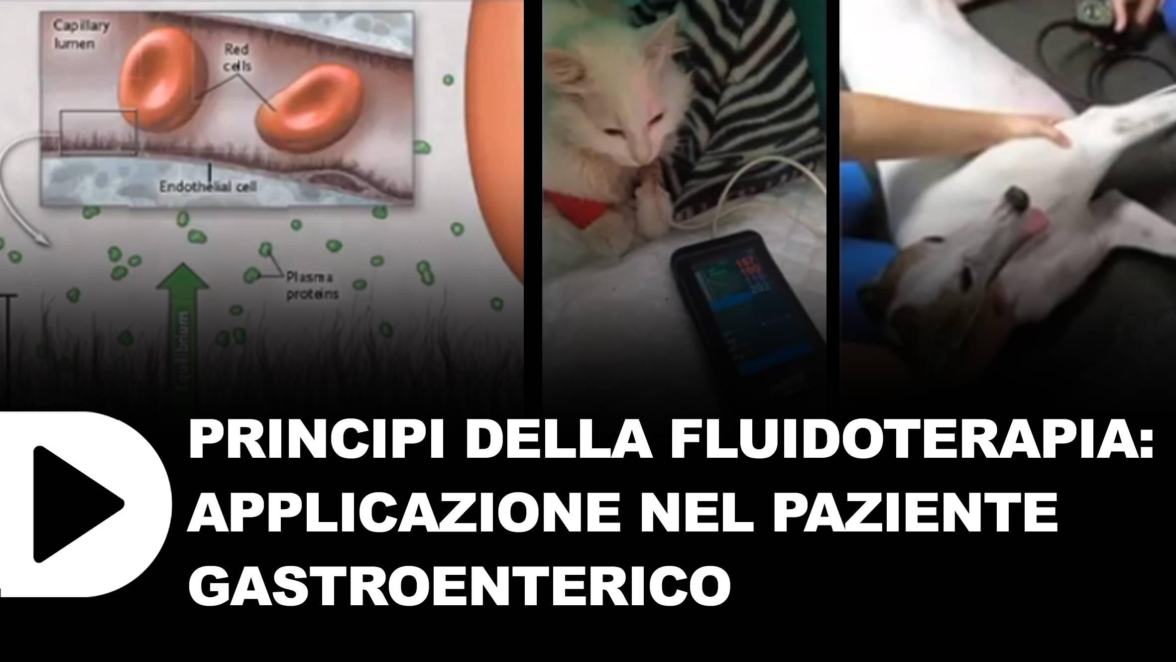 PRINCIPI-DELLA-FLUIDOTERAPIA-parte-1