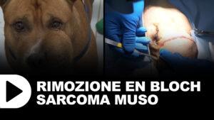 videocorso Rimozione en bloch sarcoma muso