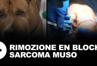 Rimozione en bloch sarcoma muso